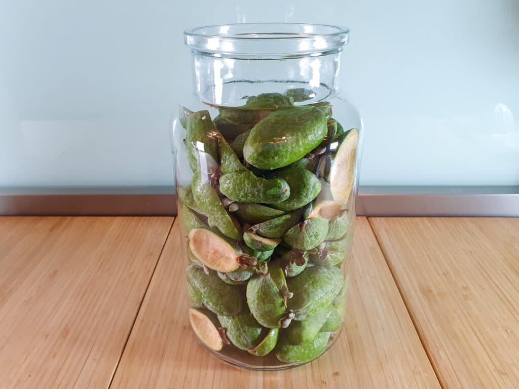 Large glass jar filled with feijoa skins.